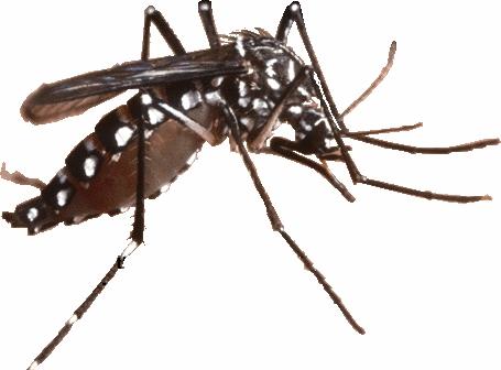 Zika virus Bonaire