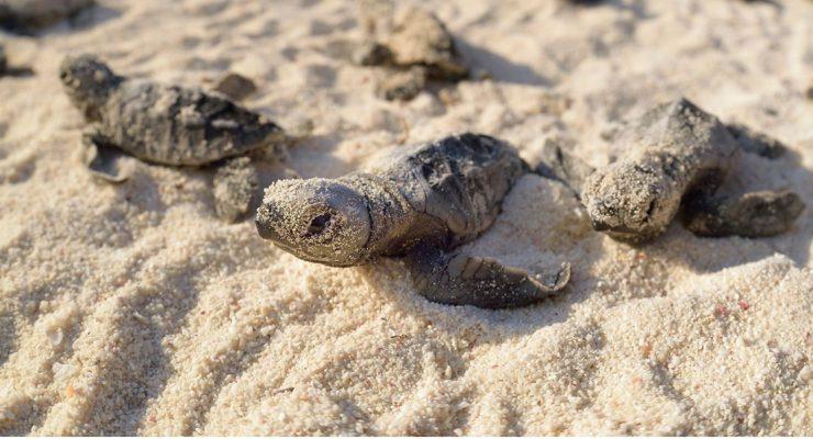 Crowdfunding Sea Turtle Conservation Bonaire