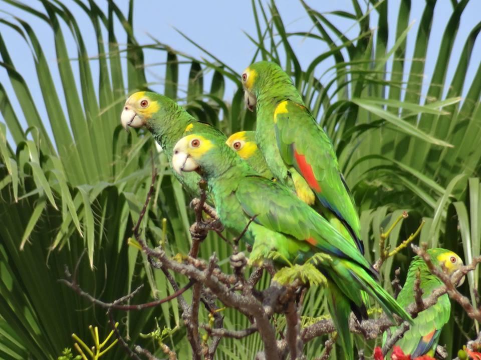 vogels bonaire