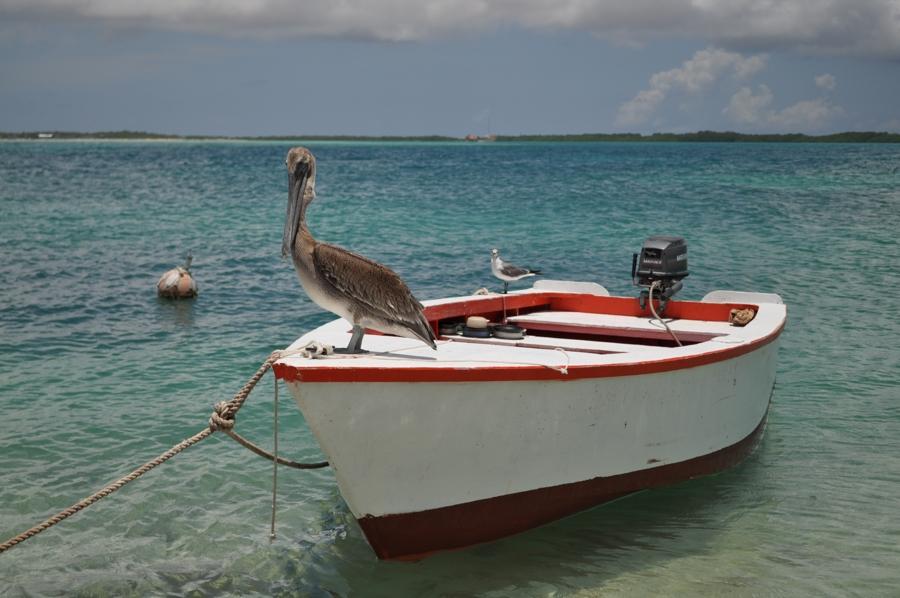 Pelican on Boat