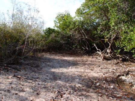 Mangrove Lac compr 3