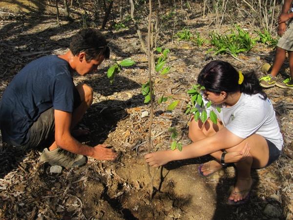 bomen planten op bonaire