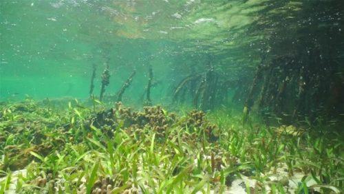 seagrass lac