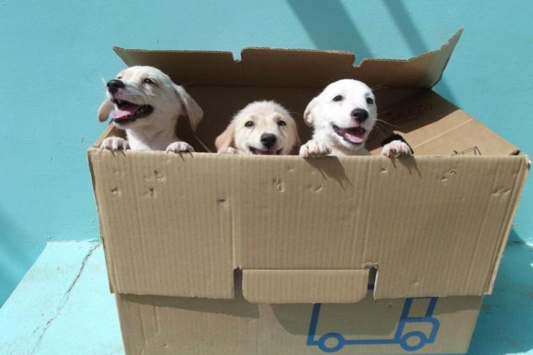 Hondenwelzijn hoog in 't vaandel op Bonaire