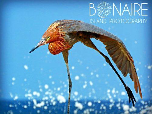 bonaire-island-photograpy-3