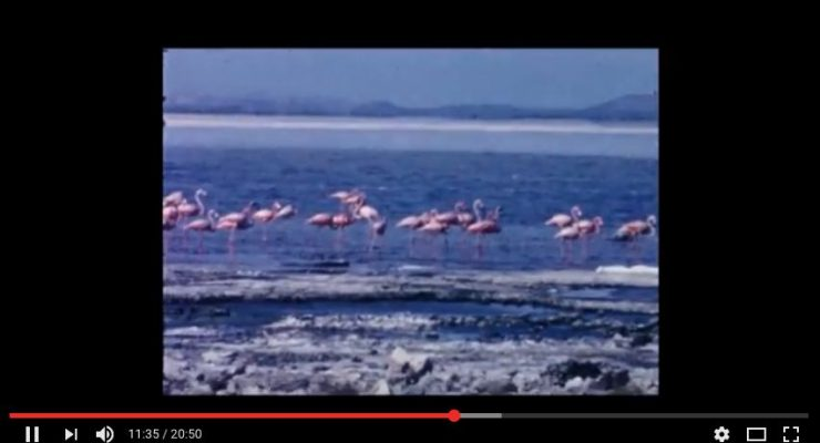 Bonaire video uit 1964 - 1966