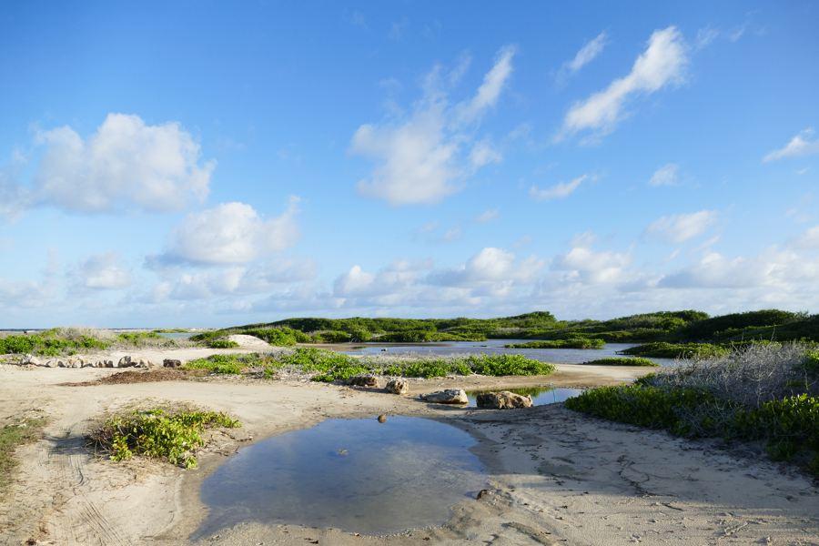 Herstel van stranden, duinen en mangroven