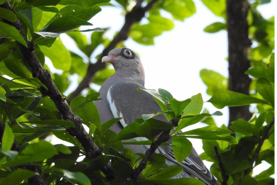 Vogels tellen in je achtertuin