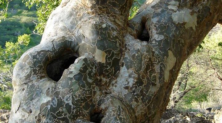 Kapvergunning bomen en cactussen