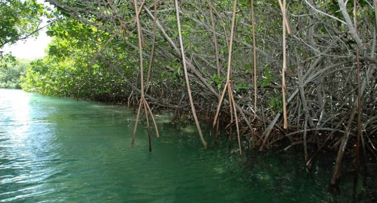 Drijvende lijnen om de mangroven te beschermen