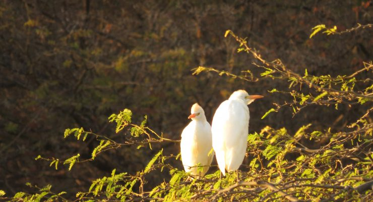 Vogels kijken met STINAPA