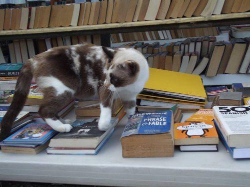 Boekenmarkt Dierenasiel @ Kaminda Lagun 26