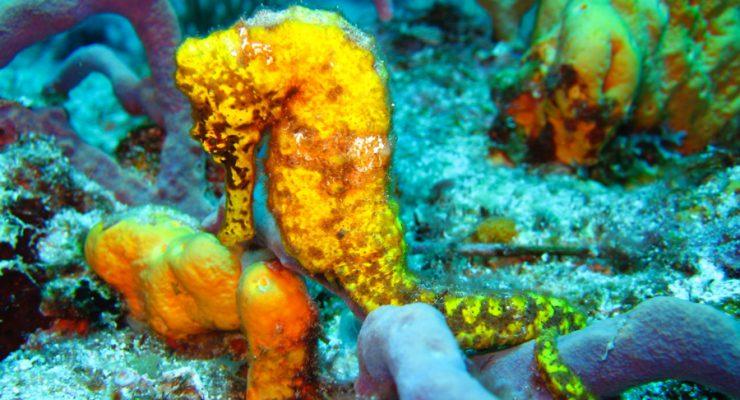 Is zonnebrandcrème schadelijk voor het rif op Bonaire?
