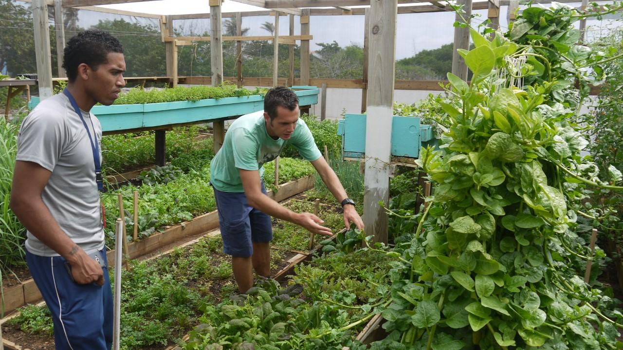 groenteteelt op Bonaire