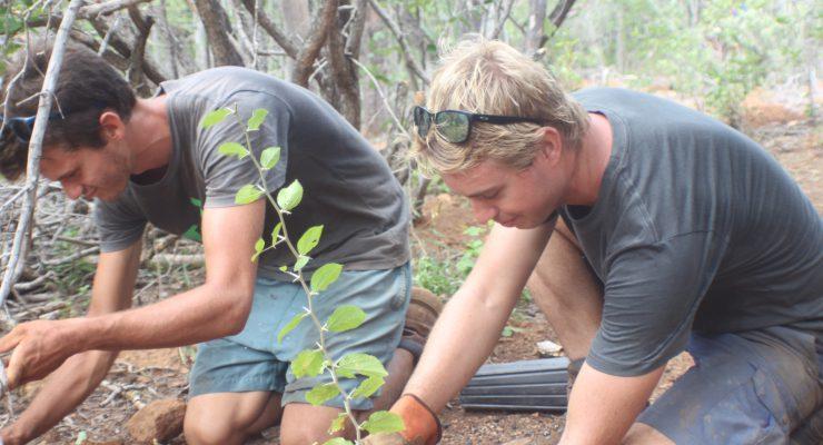 Echo plant 1000 bomen