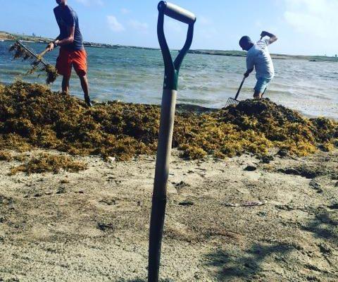 Update urgentie sargassum lagun