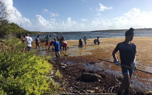 Aangespoeld Sargassum brengt vele vrijwilligers op de been