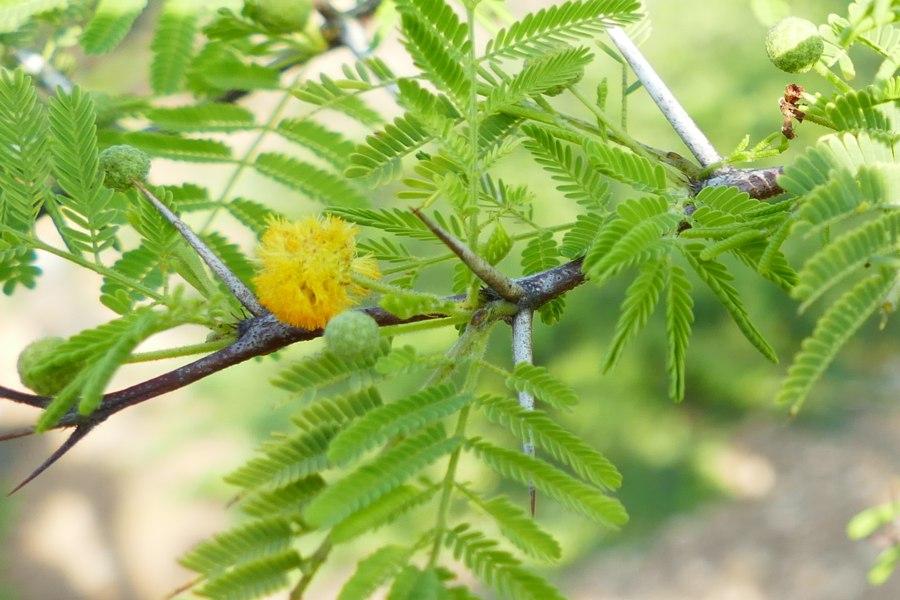 Een handvol boomsoorten op Bonaire