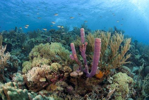 Delta Plan nodig voor het redden van het koraal