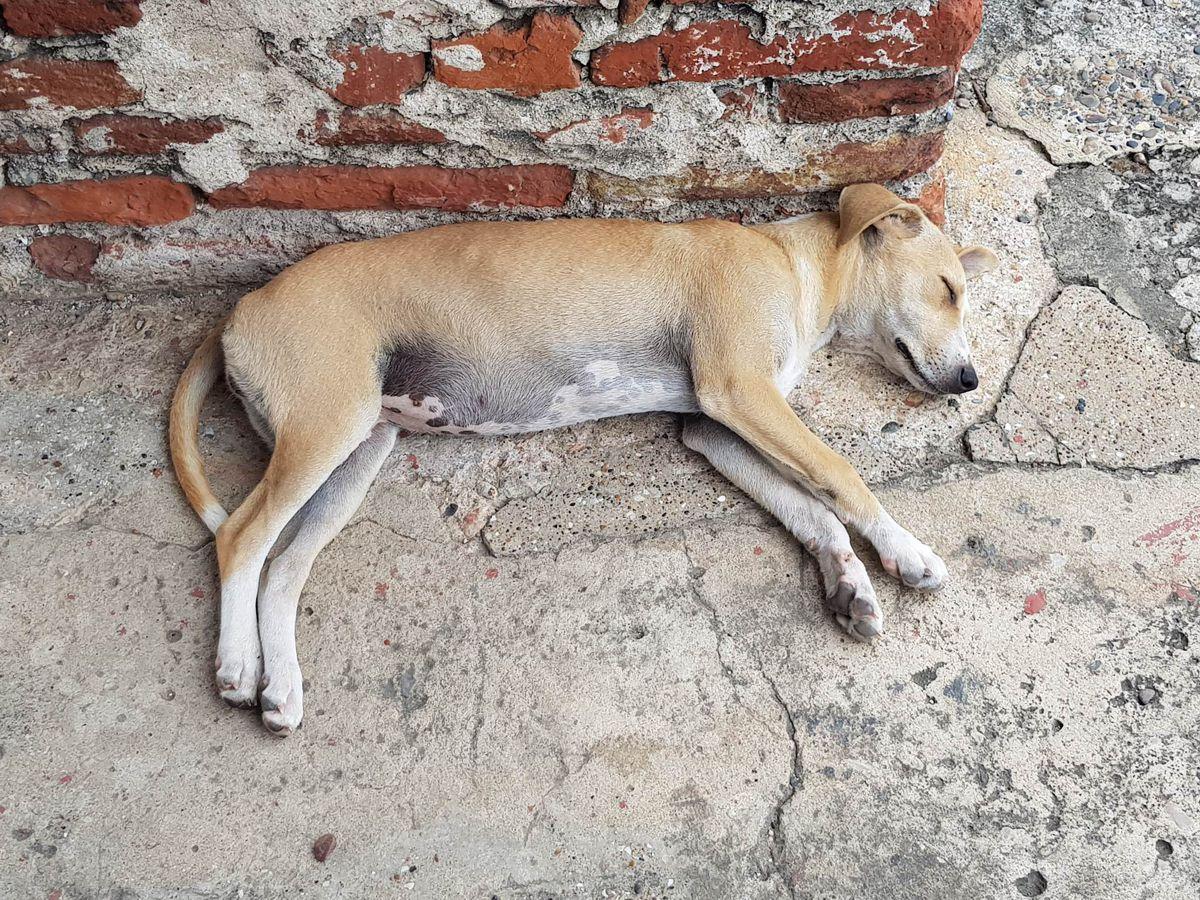 straathond foto HL