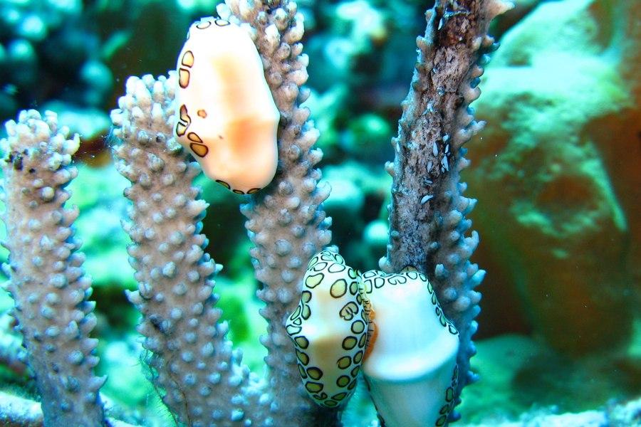 Koraalriffen bedreigd door snelle zeespiegelstijging