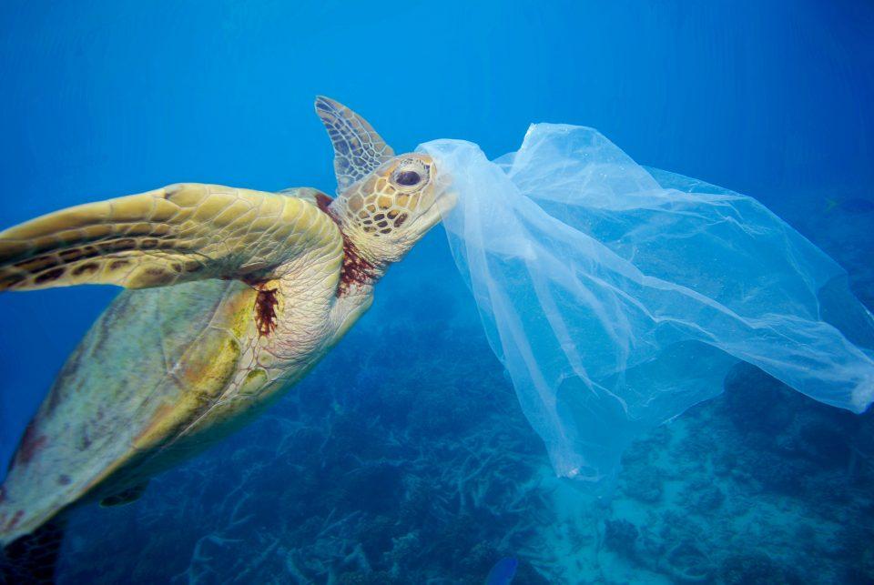 Zeeschildpad met plastic tas ©Roy Mayne, WWF