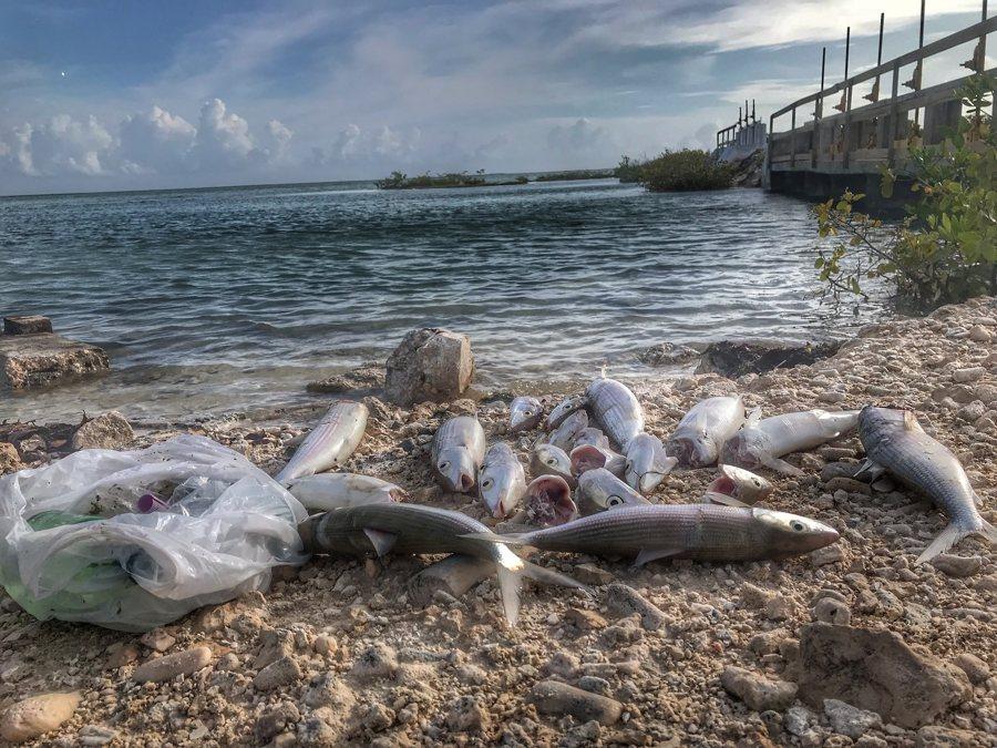 Vis weggegooid op land