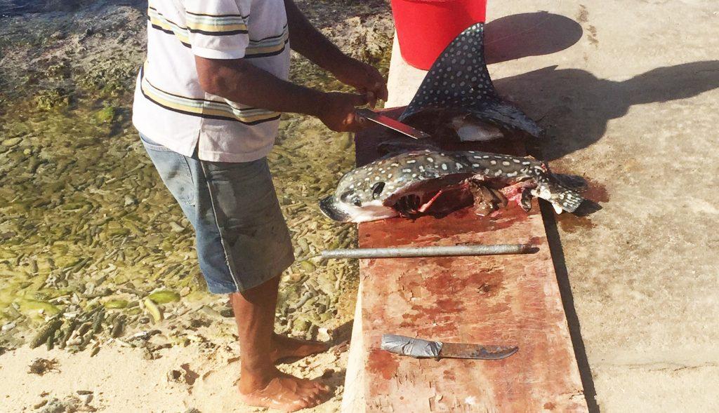 Beschermde soort gevangen door Venezolaanse visser