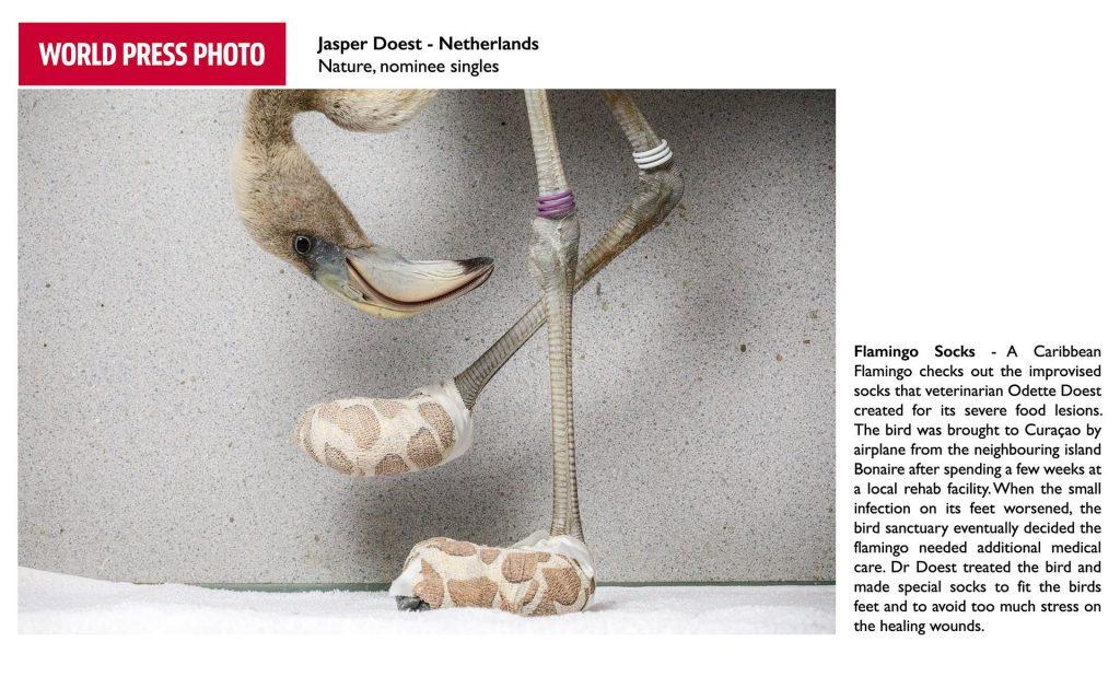 Foto van flamingo door Jasper Doest is genomineerd voor World Press Photo