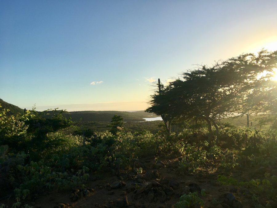 DCNA: Ingrijpen om natuur te redden op Bonaire, Statia en Saba noodzakelijk
