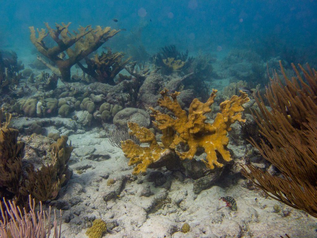 Rutte geeft aandacht aan koraal in Caribisch Nederland