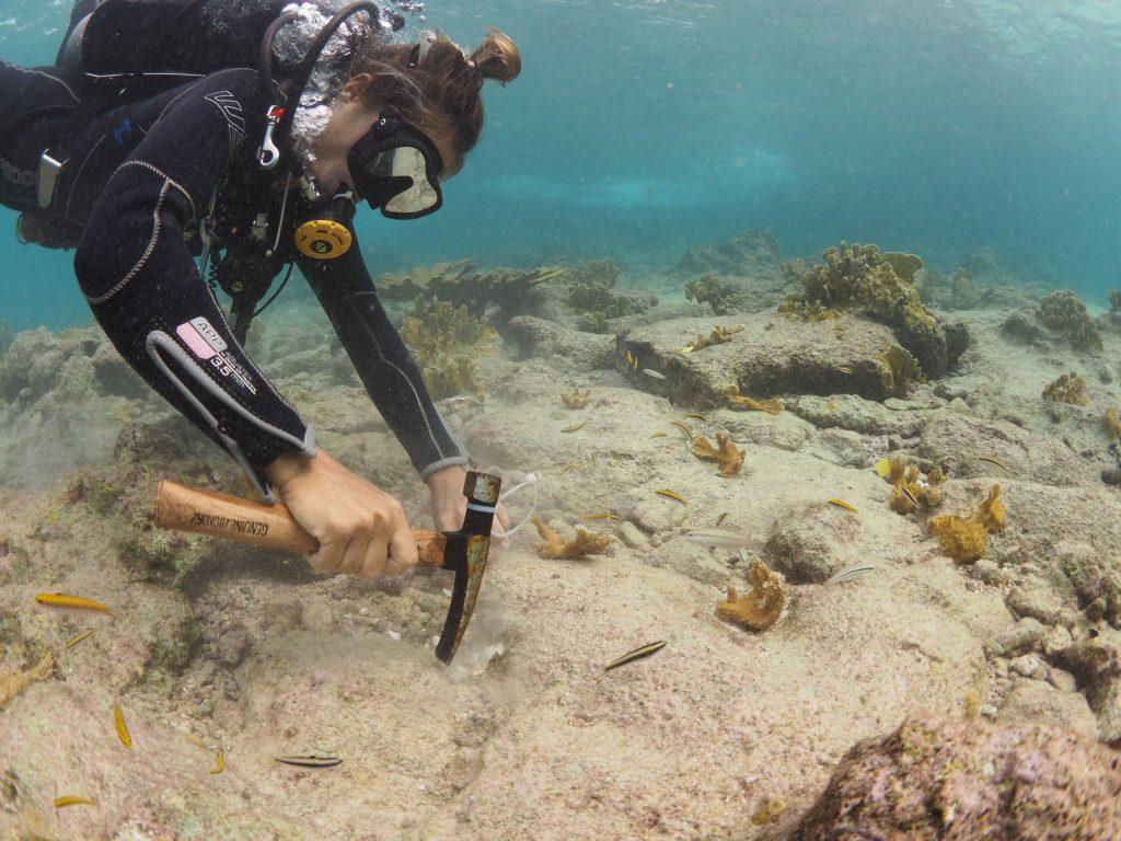 Meer dan 750 Elkhorn koralen geplant door Reef Renewal bij Oil Slick Leap