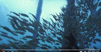 Duiken onder de Salt Pier op Bonaire