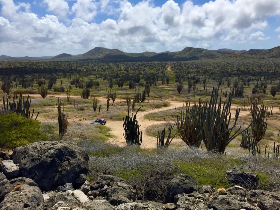 Voordelig naar de zon? Boek snel een last minute vakantie naar Bonaire!