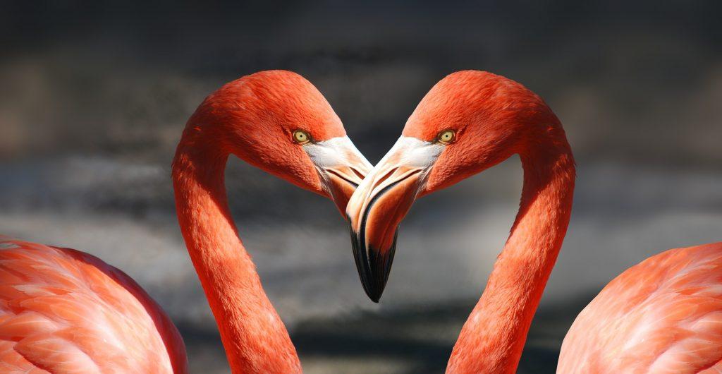 Tips voor Valentijnsdag op Bonaire