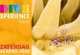 Beleef Bonaire virtueel tijdens de DiveXperience