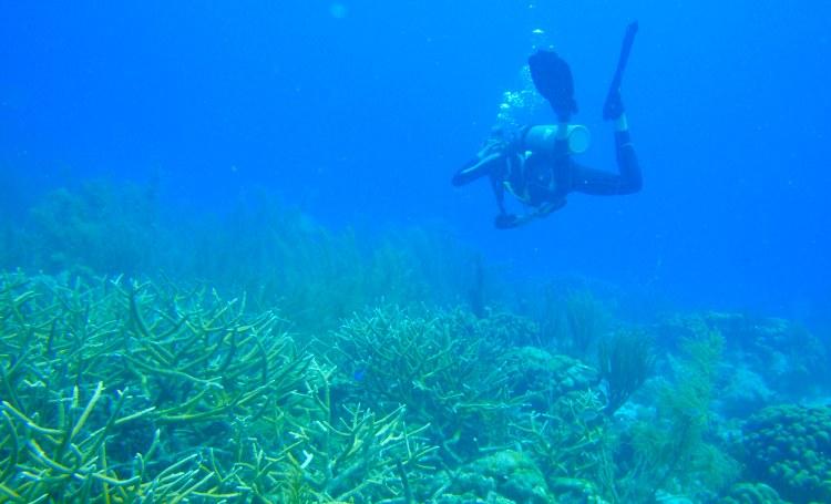7,2 miljoen euro voor bescherming van het koraal in Caribisch Nederland