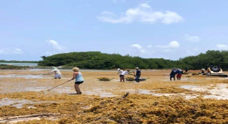 Stinapa Bonaire zoekt vrijwilligers