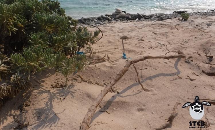 Nestseizoen zeeschildpadden van start
