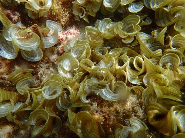 Het belang van zeewier voor de biodiversiteit van Bonaire