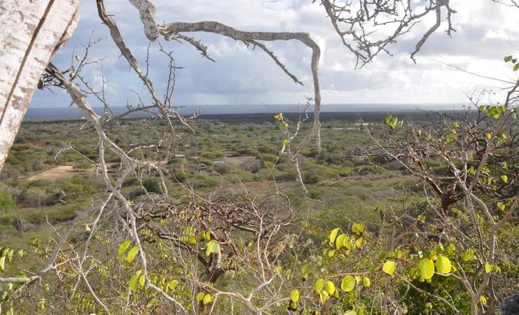Knops: OLB kan zelf ongewenste ontwikkeling plantage Boliva tegenhouden