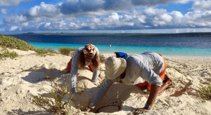 Sea Turtle Conservation Bonaire start weer met presentatie over zeeschildpadden