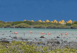 Activiteiten op Bonaire