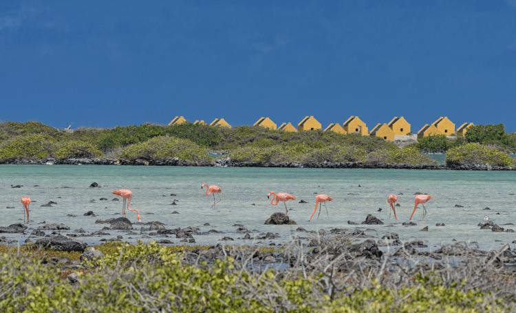 Binnenkort verplichte PCR test en antigeentest voor reizigers van Nederland naar Bonaire