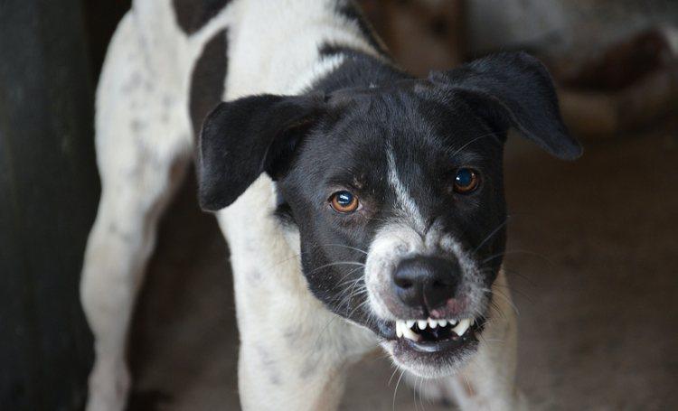 Maatregelen genomen tegen agressieve honden aan de Kibra'i Montaña