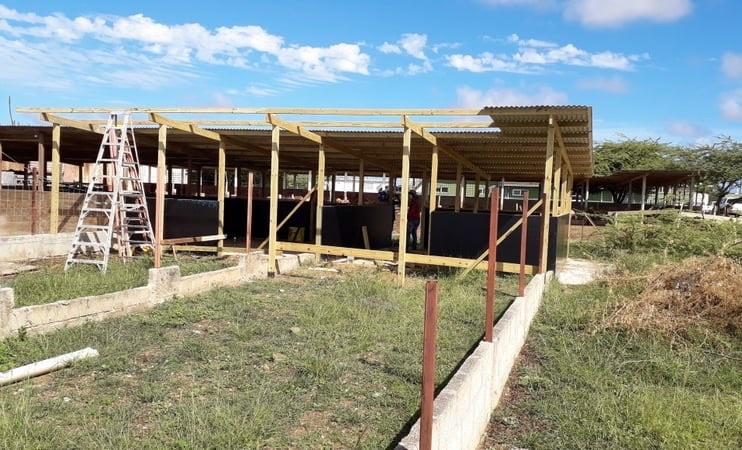 LVV importeert bokken voor rasverbetering Bonairiaanse geiten