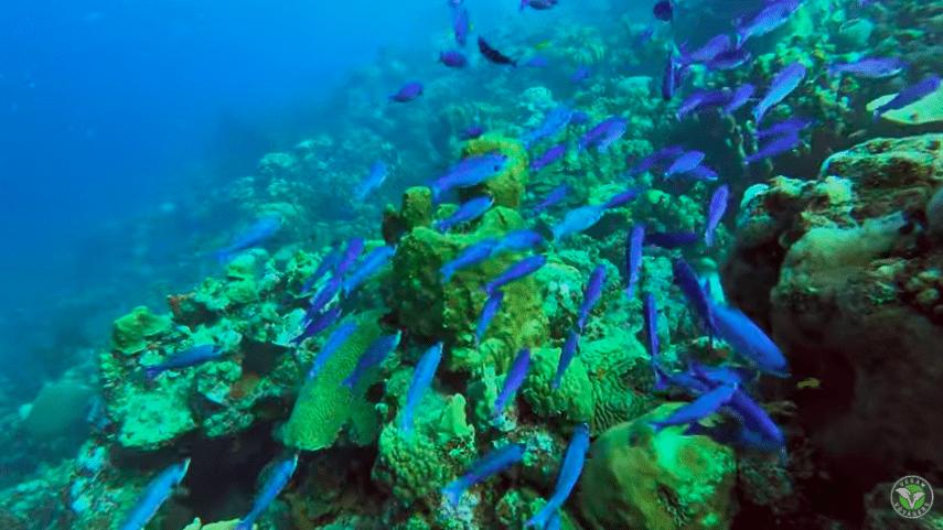 Video; Reizen naar Bonaire gedurende de Pandamic