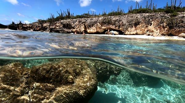 Opnames nieuwe film over Caribische flora en fauna van start