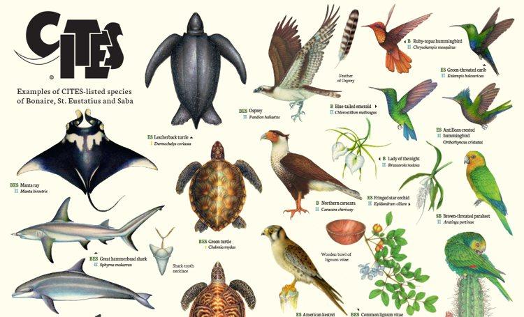 Informatiemateriaal  ontwikkeld over beschermde dier- en plantsoorten