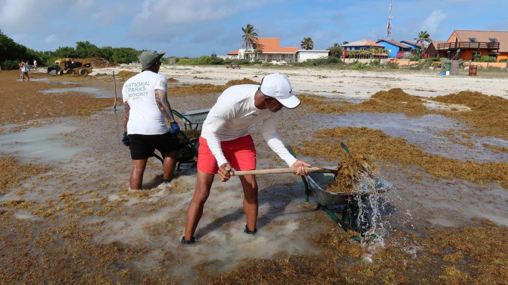 Sorobon en Lagoen opnieuw vol sargassum